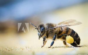 bee keeping supplies