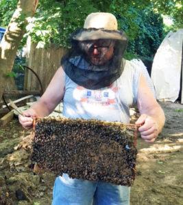 bee keeping long island