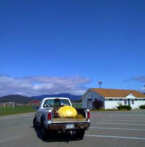 pumpkin ready for trip