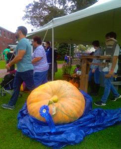 williams pumpkin at festival
