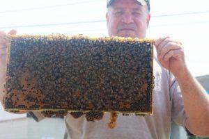 long islnd beekepping supplies